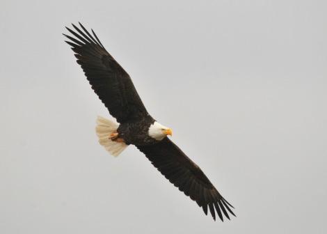 Symbol for St. John the Evangelist -- The Soaring Eagle